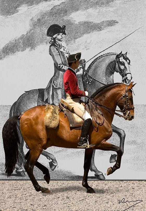 203 Best Portugal Cavalo Lusitano Lusitano Horse
