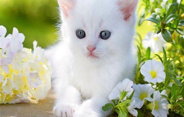 تفسير حلم القطط في المنام للعزباء والمتزوجة Cute Cats And Dogs Cute Baby Cats Baby Cats