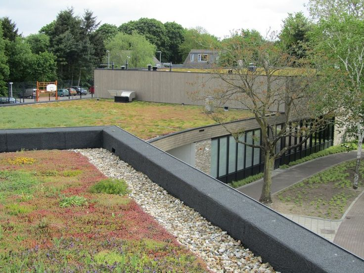 Groene daken op een school in 's-Hertogenbosch. Veel verschillende planten en kleuren.