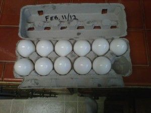 Preserve Eggs Refrigeration Free for up to 1 year with Mineral Oil - You simply apply a solid coat over the egg shell which seals the pores and keeps the oxygen from penetrating the shell. You can then store them in a cool, dark and dry place for up to one year. Sounds crazy, but what do you think our grandparents and great grandparents did without refrigeration? You can also use lard.