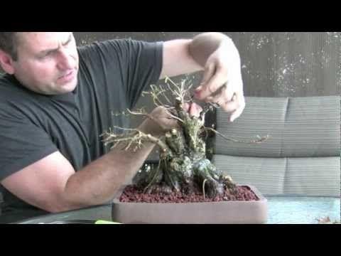 How To Bonsai - Make a Bonsai Tree - YouTube