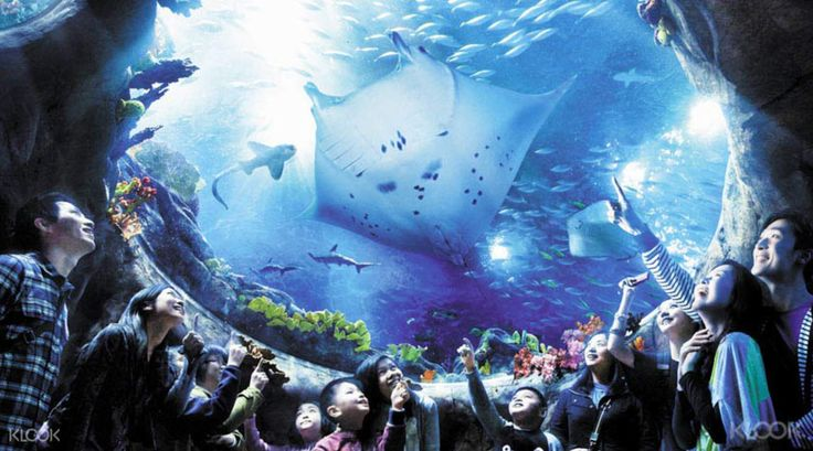 Save 15% on discounted Ocean Park tickets with Klook! The e-ticket allows you to skip the line with a mobile voucher