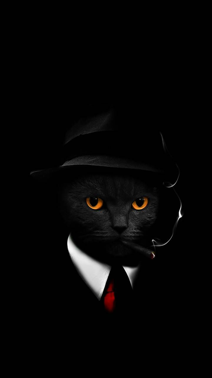 Download Cool Cat Wallpaper By Hende09 40 Free On Zedge Now Browse Millions Of Popular Cat Iphone Wallpaper Cat Cat Wallpaper Cool Wallpapers For Phones