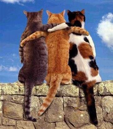 Открытки - Международный день дружбы - Друзья- коты