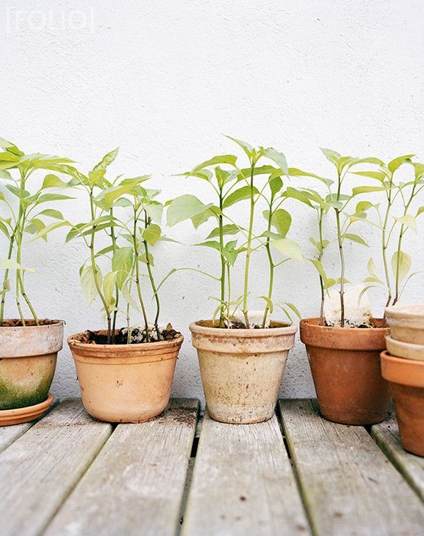 Potted plants: Plants Can, Gardens Ideas, Terra Cotta, Terracotta Can, Flowers Pots, Herbs Gardens, Green Plants, Clay Pots,  Flowerpot