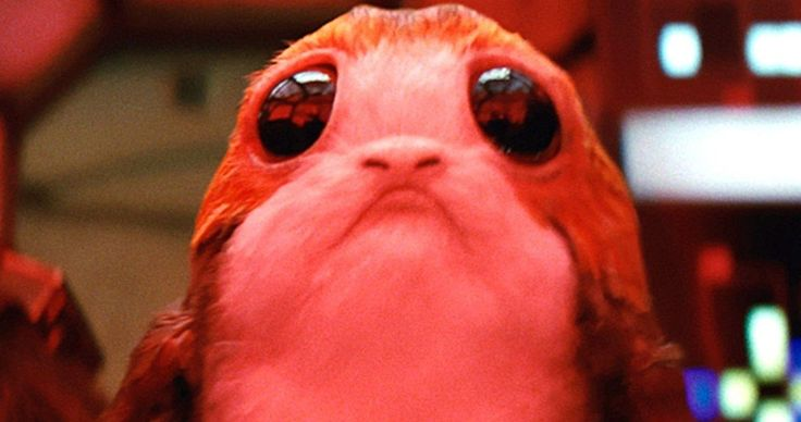 Star Wars 8: Luke Doesn't Eat Porgs, But Someone Else Might Be -- Someone might be stress eating the lovable Porgs to dull the pain of the loss of Han Solo in Star Wars 8. -- http://movieweb.com/star-wars-8-porgs-food-luke-chewbacca/