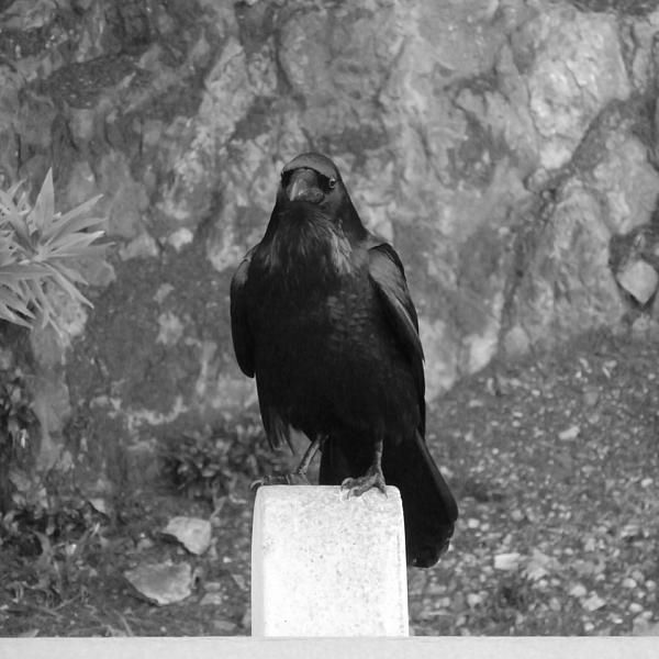 A bird on Alcatraz Island, California. Want this picture printed on canvas or cards etc? Click on the image :)