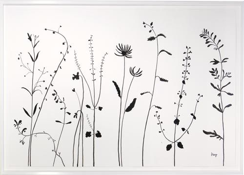 Wildflower Line Drawing : Hugo guinness john derian pinterest wildflower