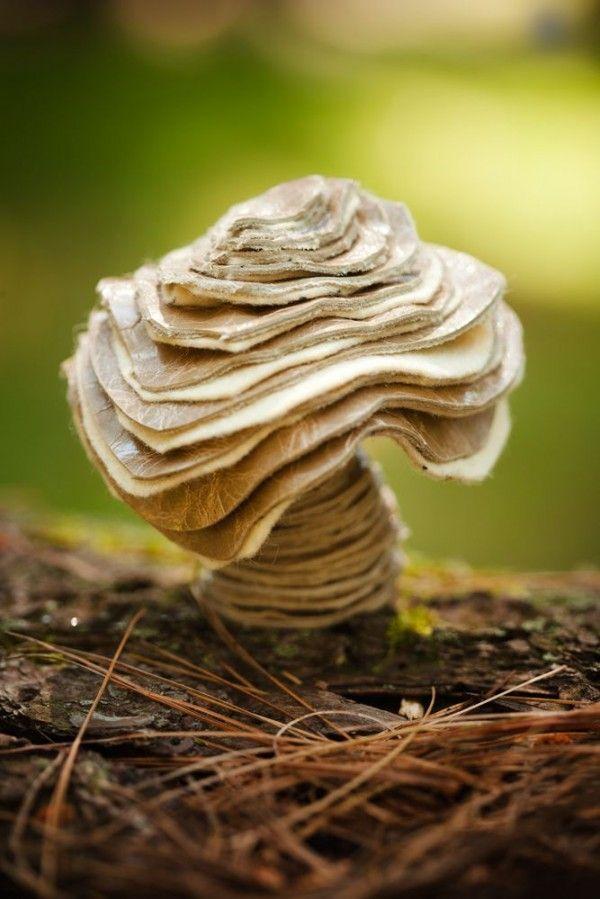 """40 Maravillosos hongos que harán que jamás vuelvas a llamarlos """"asquerosos"""""""