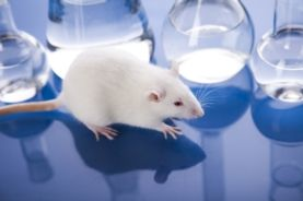 animal testing should be banned persuasive speech