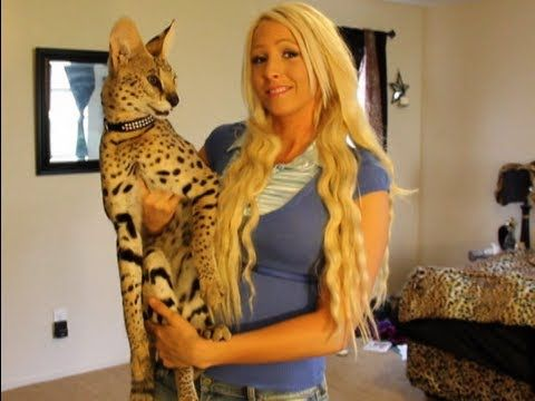 Serval or Savannah, which makes a better pet? Cat Blog