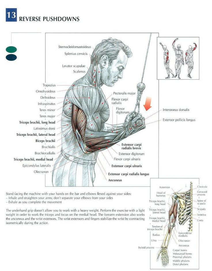 Triceps #workout #gymrat