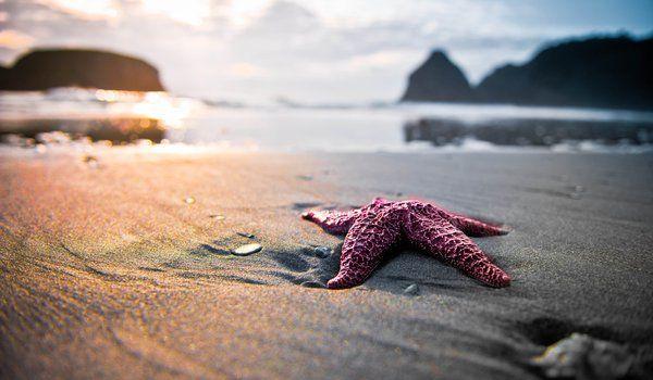 Обои на рабочий стол: звезда, песок, пляж, природа