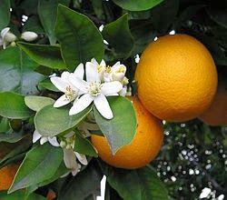 Τhe benefits of orange ~ Οι ευεργετικές ιδιότητες του πορτοκαλιού