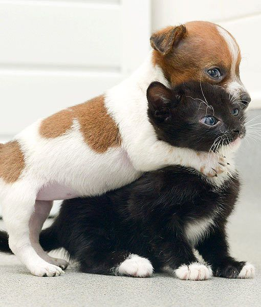 At Battersea Dogs & Cats Home in Old Windsor, U.K., two lonely baby animals have adopted each other. They have become such close friends that they treat each other like sisters.