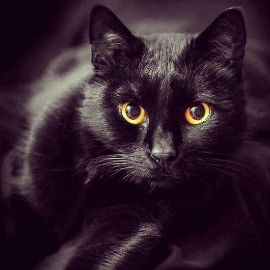 Totally black