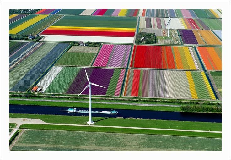 I campi di tulipani olandesi visti dall'alto