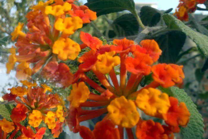 10 Most Poisonous Plant Poisonous Plants Plants Planting Flowers
