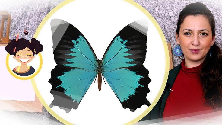 Desenam un fluture - Miss Maddy - lectii de desen