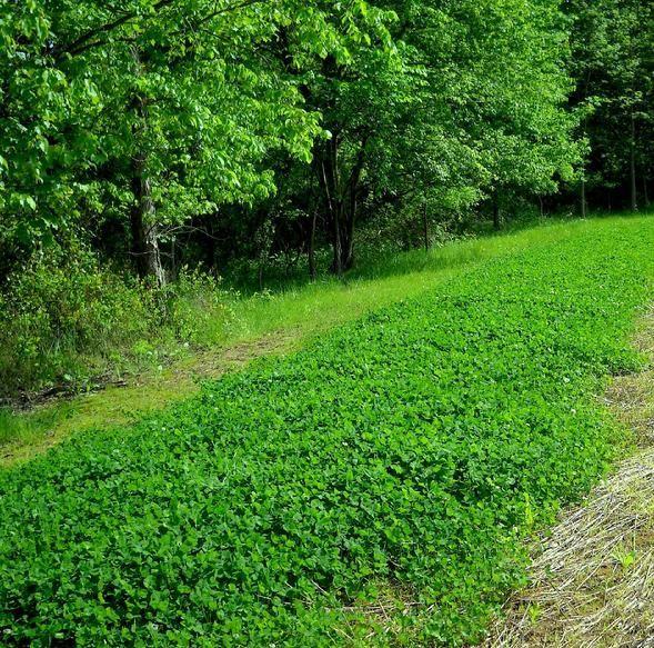 deer food plots, food plot and deer, small food plots for deer, deer and small food plots
