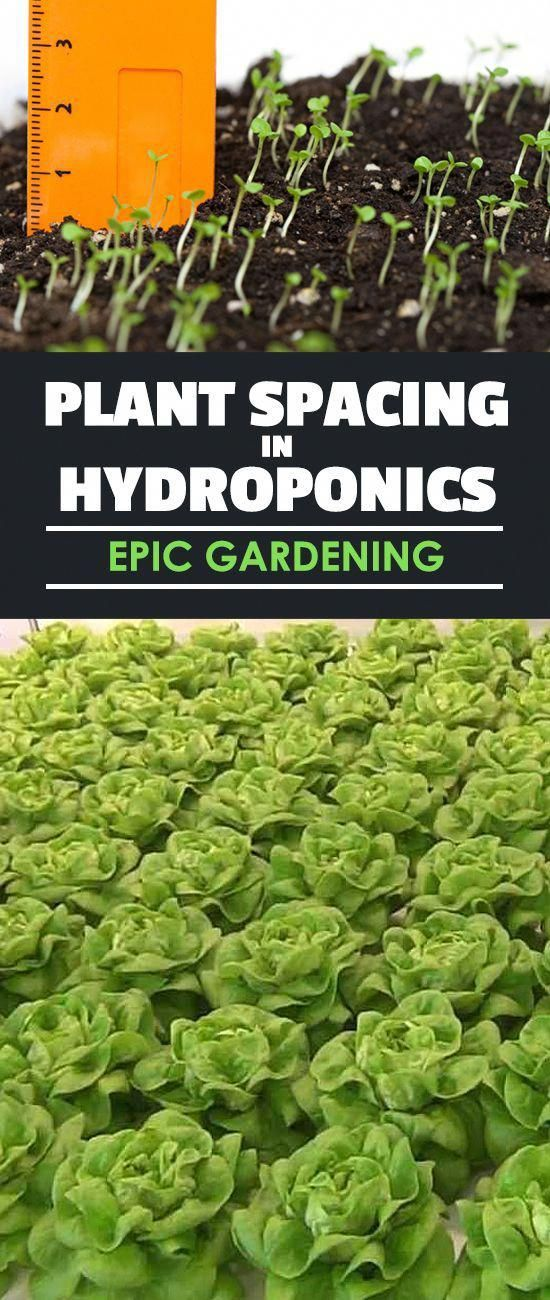 What are the differences in plant spacing in hydroponics ...