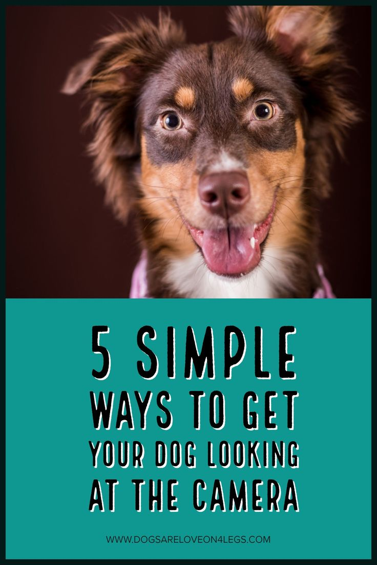 5 Simple Ways To Get Your Dog Looking At The Camera | Dog, Dog Photography, Photography Tips, Dog Photos,