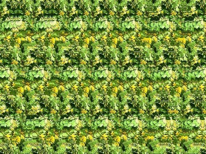 Imagenes estereoscopicas o Estereogramas, que son?. El estereograma es una ilusión óptica basada en la capacidad que tienen los ojos de captar imágenes desde distintos puntos de vista. Esas perspectivas diferentes son captadas de tal forma por el... - Ysela_CreO