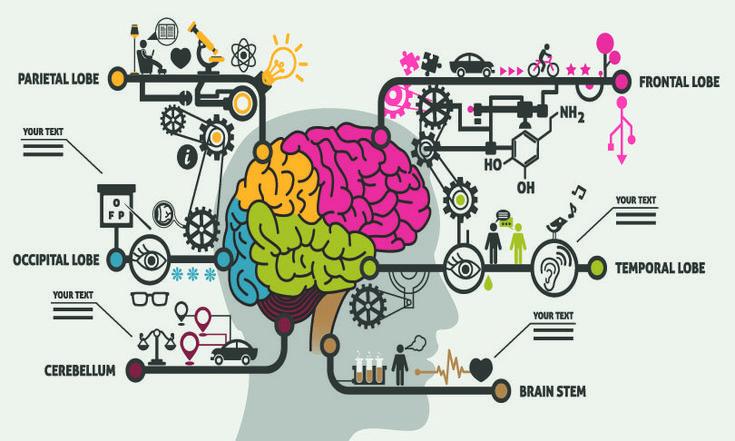 StellaCaraman_brain_shutterstock