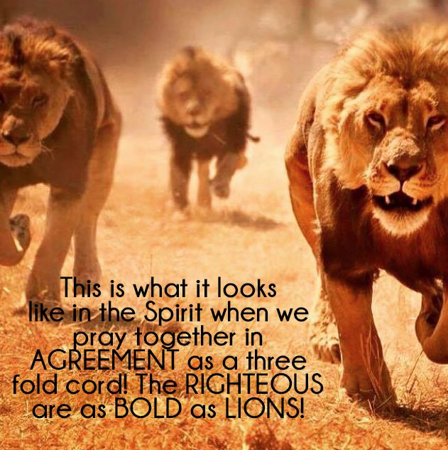 This is what it looks like in the Spirit when we pray together in AGREEMENT as a three fold cord! The RIGHTEOUS are as BOLD as LIONS!