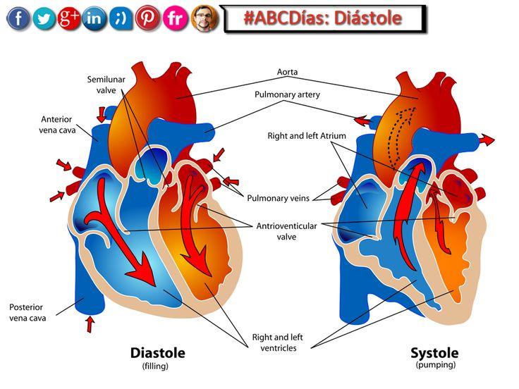 Ms de 25 ideas increbles sobre Arterias del corazon en Pinterest