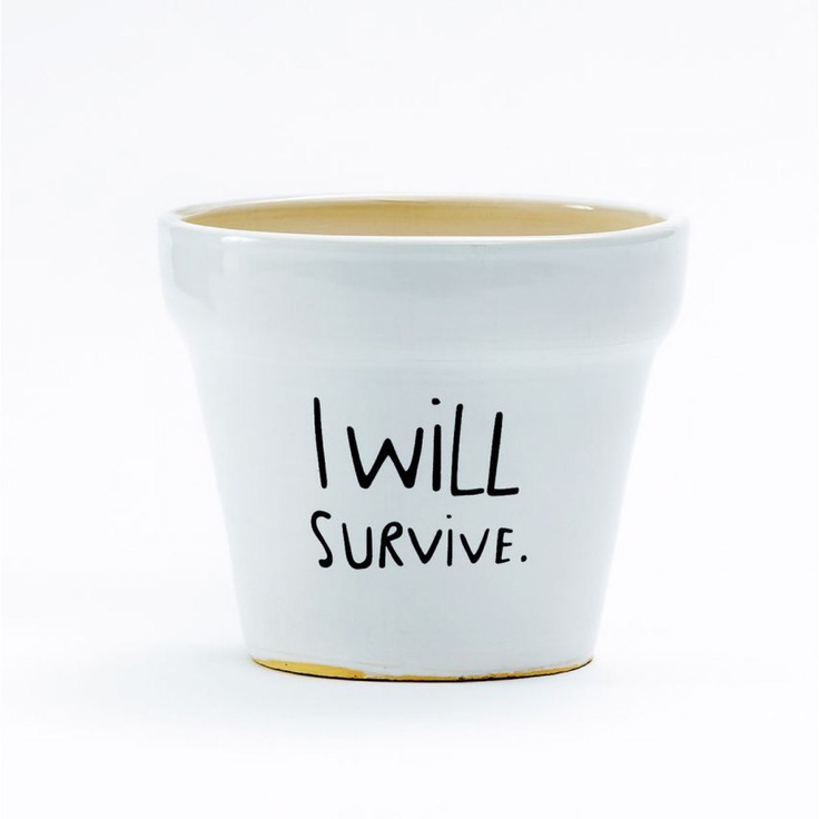 I Will Survive Plant Pot. I need to put all my plants into pots like this!