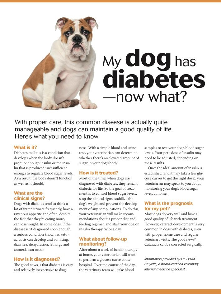 My Dog Has Diabetes Now What Dvm360 Diabetic Dog Dog Health