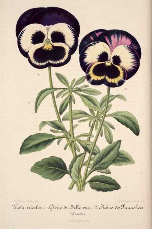 No wonder Merrie Melodies cartoons used flowers as characters...