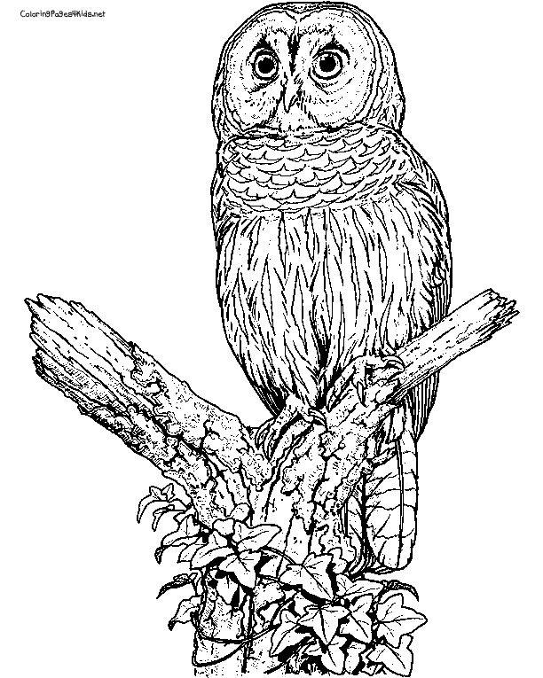21 best Eagle Coloring Pages images on Pinterest | Eagles ...