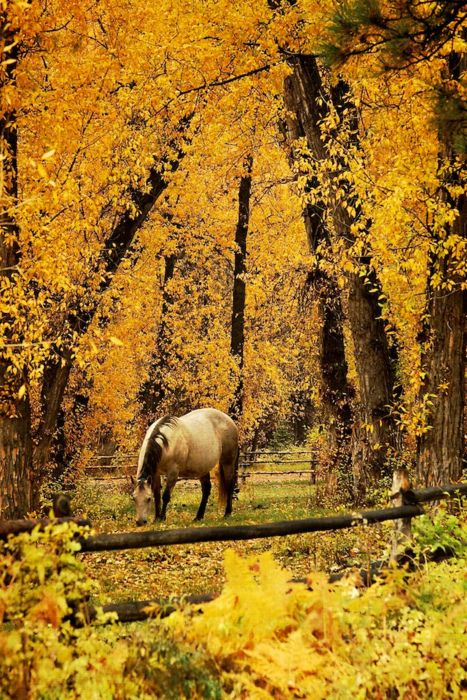 gorgeous!!!!!!Autumn Scene, Hors Grazing, Fall Beautiful, Fall Leaves, Hors In Autumn, Autumn Leaves, Autumn Horse, Hors In The Fall, Country Hors