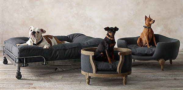 It's a dog house that's an ottoman that's an end table? Description from dogster.com. I searched for this on bing.com/images
