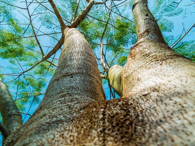 What More Do You Know about Amazing Tree Biology? Trees are beautiful, useful and ecologically essential. Test your knowledge on the things that make a tree, well, a tree.