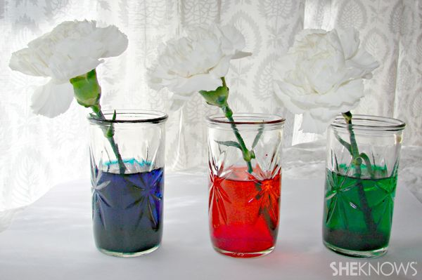 Image from http://www.articlesweb.org/blog/wp-content/gallery/science-experiment-ideas-5/Science-Experiment-Ideas-15.jpg.