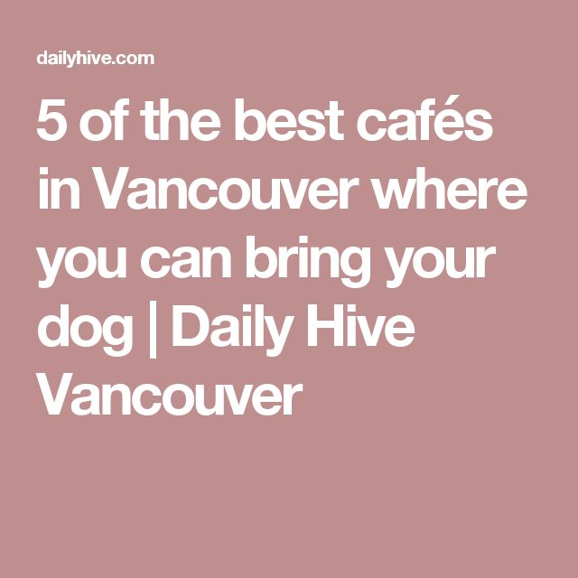 5 of the best cafés in Vancouver where you can bring your dog | Daily Hive Vancouver