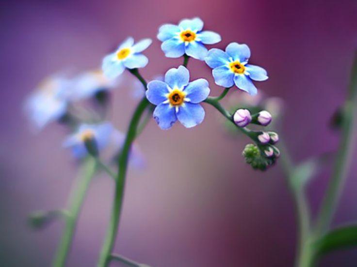 Тропічні квіти - шпалери на робочий стіл: http://wallpapic.com.ua/nature/tropical-flowers/wallpaper-10123
