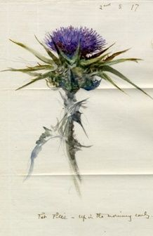 John Ruskin: Thistles - Flower of Scotland (beautiful,strong, dangerous, the color of royalty, shaped like a crown)