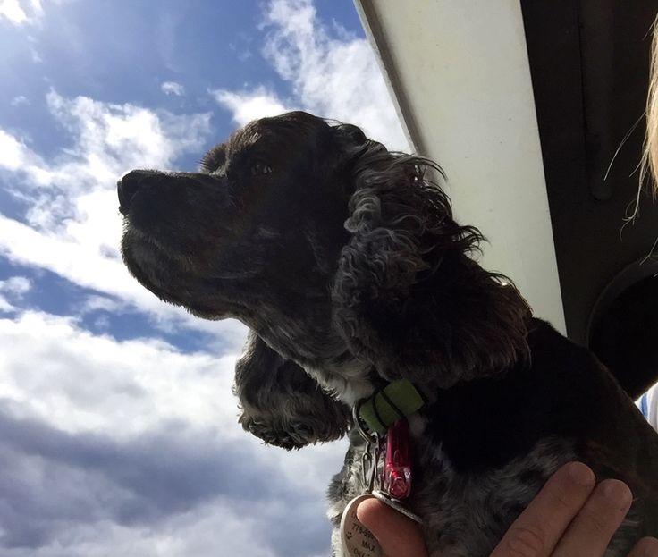 Max smelling the ocean air!