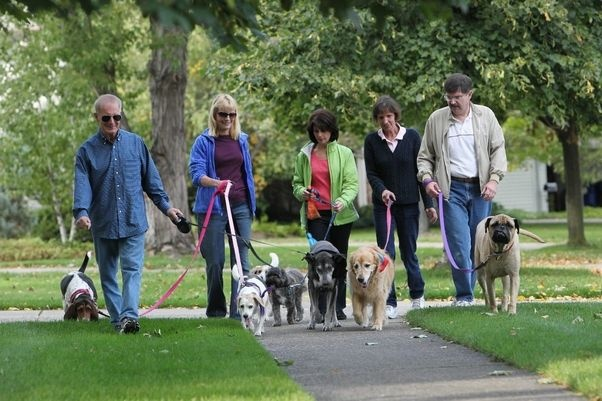 Join A Dog Walking Group In Your Area Lax Fresh Charge Ti