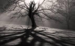 Картинки по запросу туманный лес
