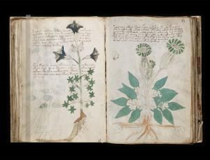Mexican plants could break code on Voynich manuscript (Image: General Collection, Beinecke Rare Book and Manuscript Library, Yale University)