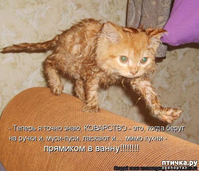 физико-механическим свойствам ржачные картинки с кошками и надписью позволяет