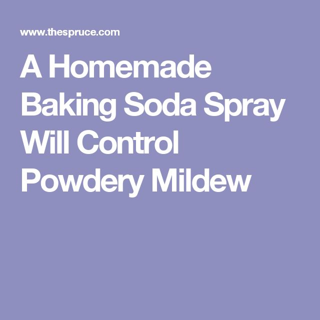 17 best ideas about powdery mildew on pinterest powdery mildew treatment tomato garden and. Black Bedroom Furniture Sets. Home Design Ideas