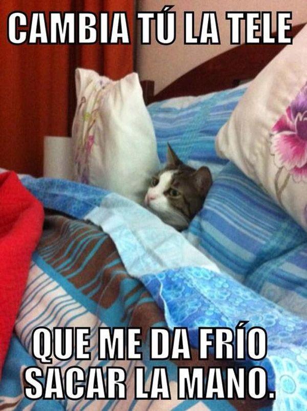 Frio Al Sacar La Mano Funny Jokes For Kids Funny Work Jokes Funny Cat Memes