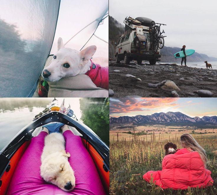 Instagramkontot campingwithdogs visar bilder på hundar som är med på semester.