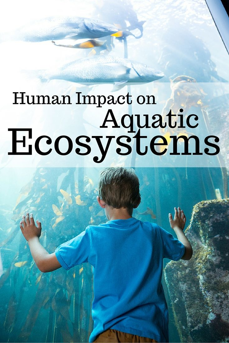 human impact on the ecosystem Ecosystem encompasses all living things (animals, plants and microorganisms)  and  this article outlines various human activities affecting an ecosystem.